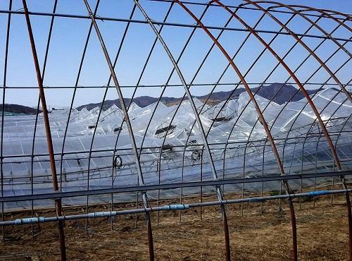 民主党栃木県連≪大雪による農業被害に関する緊急現地調査≫へ!⑫