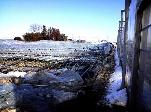 民主党栃木県連≪大雪による農業被害に関する緊急現地調査≫へ!⑬