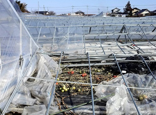 民主党栃木県連≪大雪による農業被害に関する緊急現地調査≫へ!⑮