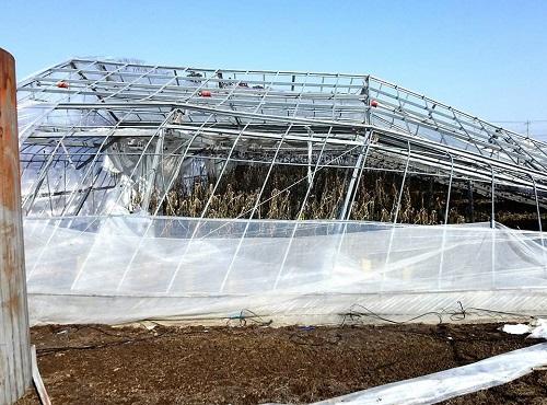 民主党栃木県連≪大雪による農業被害に関する緊急現地調査≫へ!⑯