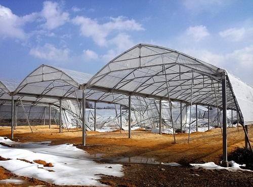 民主党栃木県連≪雪害被害に関する現地調査≫!速報3⑦