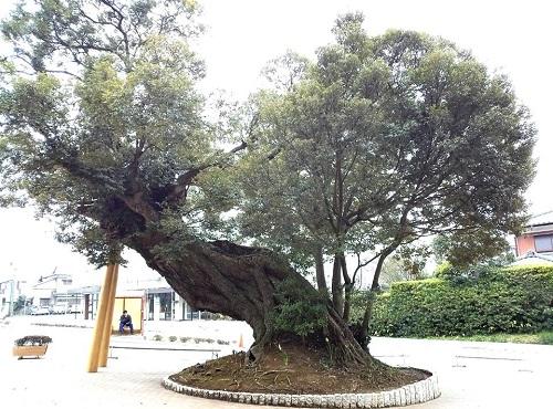 東国三社参詣!鹿島神宮へ25