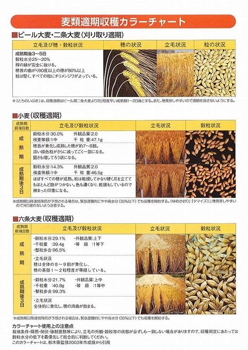二条大麦等「穂発芽」被害 調査活動と緊急要望!⑫