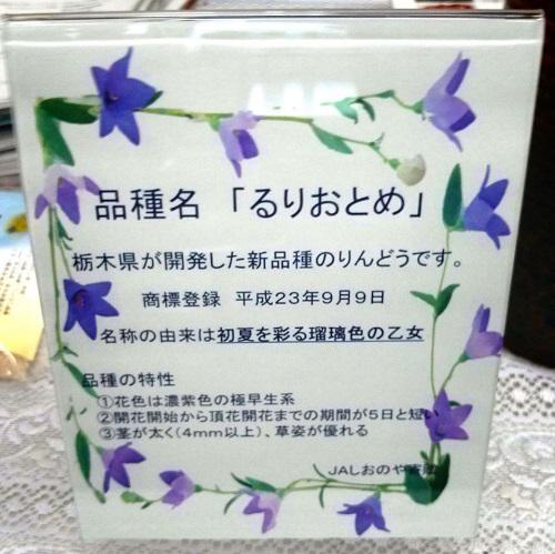 栃木県議会≪第324回 臨時会議≫本会議 採決⇒散会!②