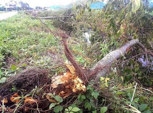 台風11号による突風被害<現地調査>へ!その2壬生町七ツ石 他③