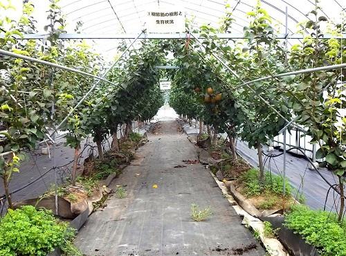 おいでよ!栃木県農業試験場<第31回 公開デー>へ!!04