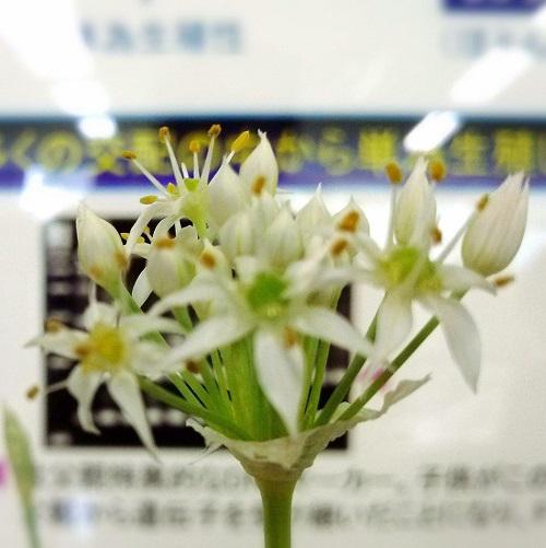 おいでよ!栃木県農業試験場<第31回 公開デー>へ!!09