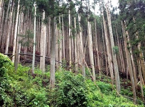 栃木県議会 農林環境委員会≪県内現地調査≫!速報1⑥
