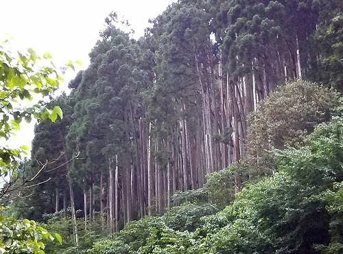 栃木県議会 農林環境委員会≪県内現地調査≫!速報1⑦