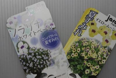 夏すみれ_IGP5159 (1)
