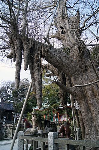 140309神奈川 海南神社②