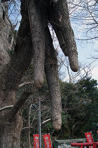 140309神奈川 海南神社⑥