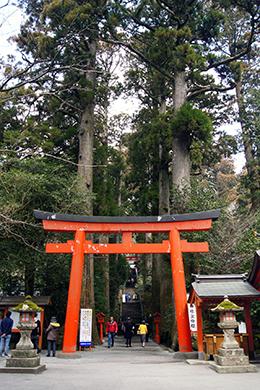 140317神奈川 箱根神社杉④