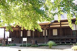 140517埼玉加須 龍蔵寺銀杏