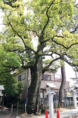 140714埼玉 芳川神社椨④