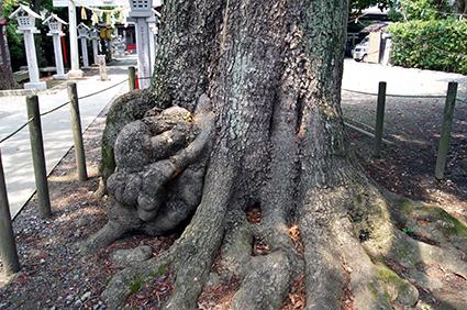 140714埼玉 芳川神社椨⑥