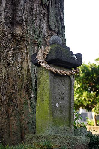 140802埼玉 聖徳寺の銀杏④