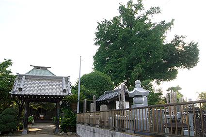 140802埼玉 聖徳寺の銀杏⑥