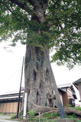 140829埼玉 香取神社椋①