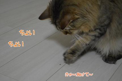 3RC7TEKxukfGSvd1404949559_1404949941.jpg