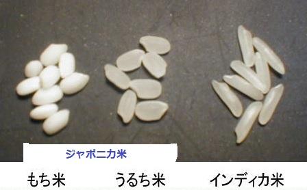 2014-7-24ジャポニカ米とインディカ米比較