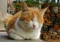 猫まばたき