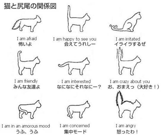 猫のしっぽ図