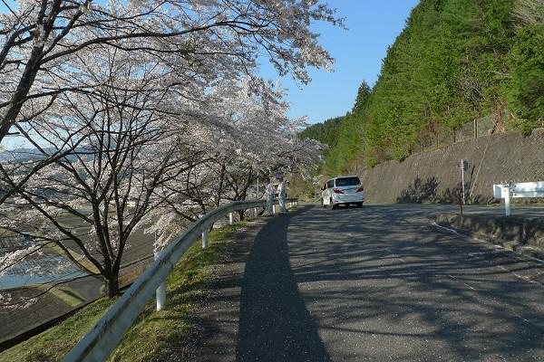 140414-田瀬の桜