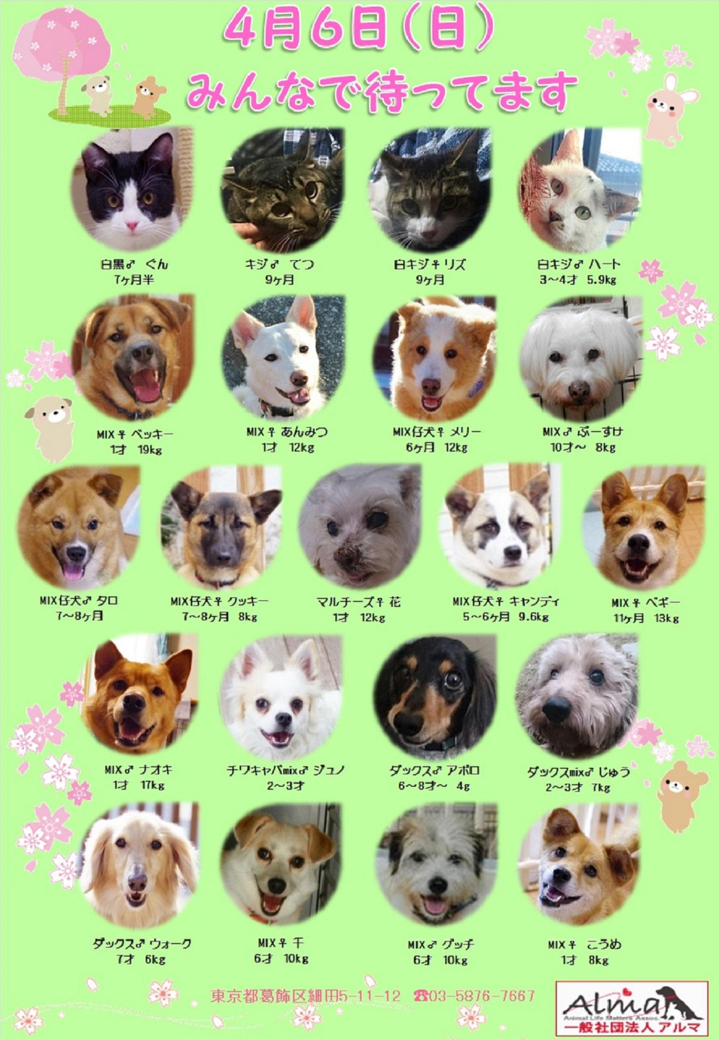 ALMA ティアハイム 4月6日 参加犬猫一覧
