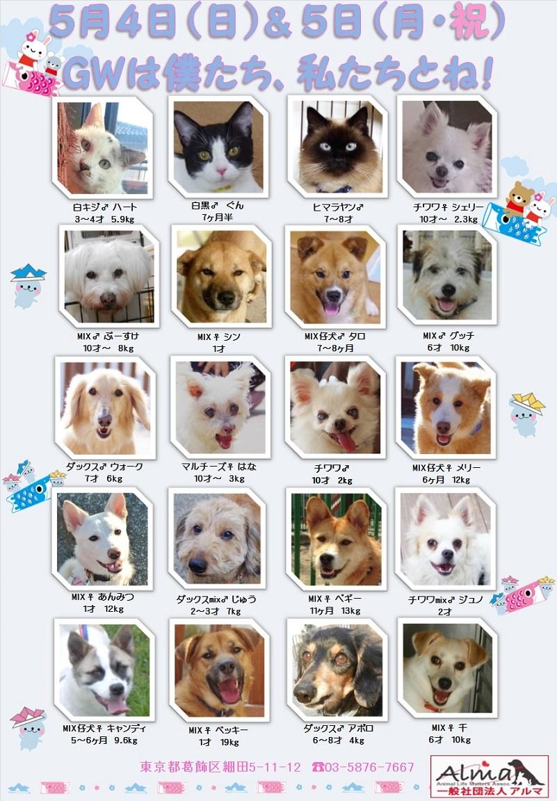 ALMA ティアハイム 5月4&5日 参加犬猫一覧