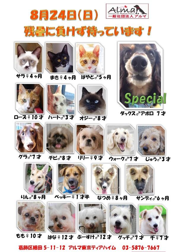 20140824参加犬猫一覧