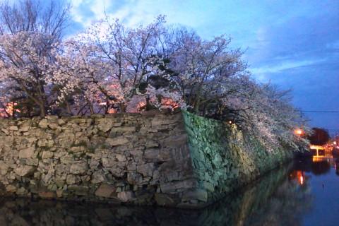 2014/04/02夜桜