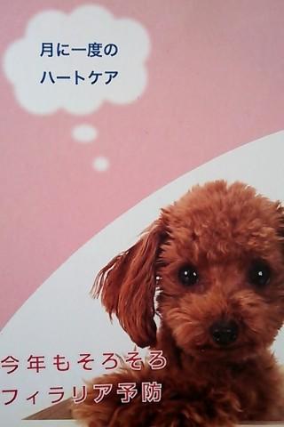 2014お知らせ葉書