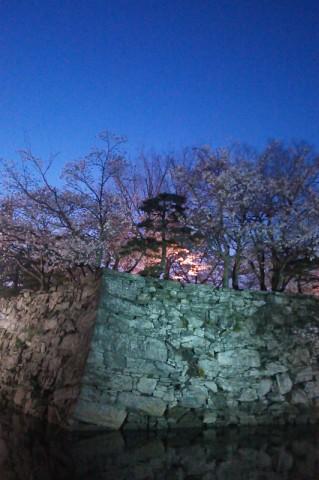 2014/03/31夜桜