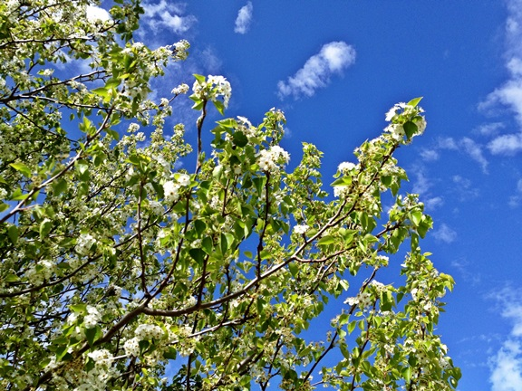 Tree_2014091508424926a.jpg