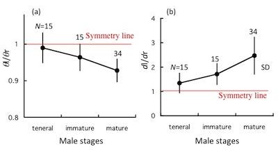 ミヤマカワトンボ非対称グラフ