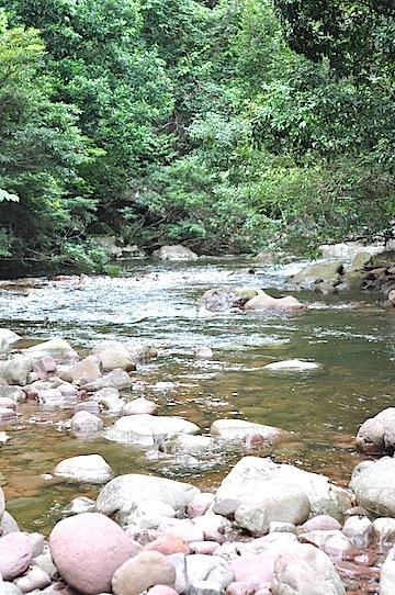 森林公園の川