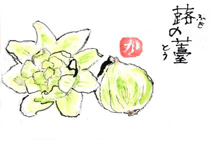 蕗の薹0220