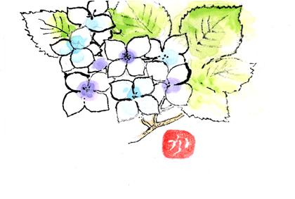 紫陽花0609