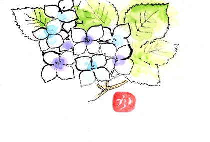 紫陽花0626