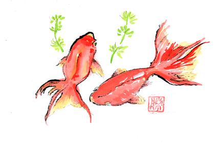 金魚0708