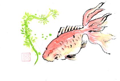金魚0715