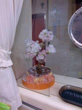 20014uketukesakura.jpg