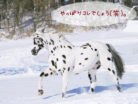 lynn-m-stone-appaloosa-horse-trotting-through-snow-usa.jpg