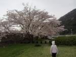 あいにくの雨20140405