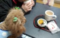 夕方のお茶4