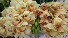 BDに届いたお花4