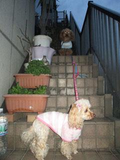 階段にて1