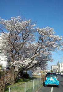 春の公園 a