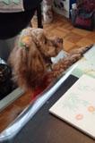 お昼ご飯 お寿司と南京6